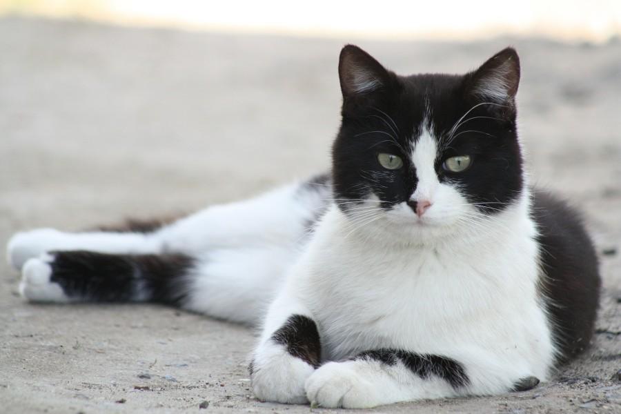 cat-179611_1920